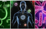 Бактериальная инфекция: симптомы и лечение заболевания у женщин, антибиотики