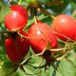 Народные средства от боли в желудке: травы, что делать, лечение