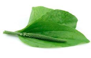 Как наладить пищеварение и работу кишечника - травы для улучшения пищеварения